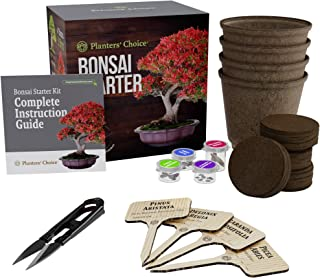 Best bonsai starter plants Reviews