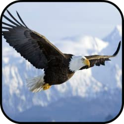 Image: Sky Eagle Attack | puzzle game