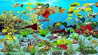Guppies Aquarium Screen Saver [Download]