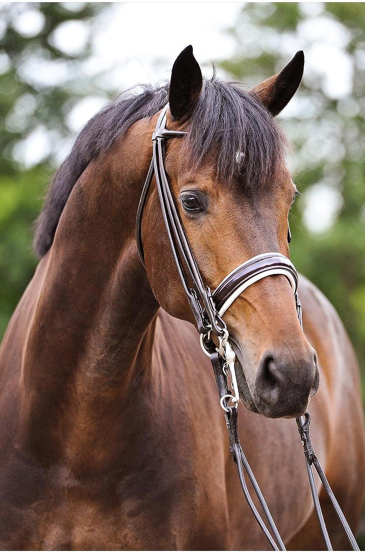 Primera  Rome  Curb Bit for FullBlooded Horses Black   White Lining