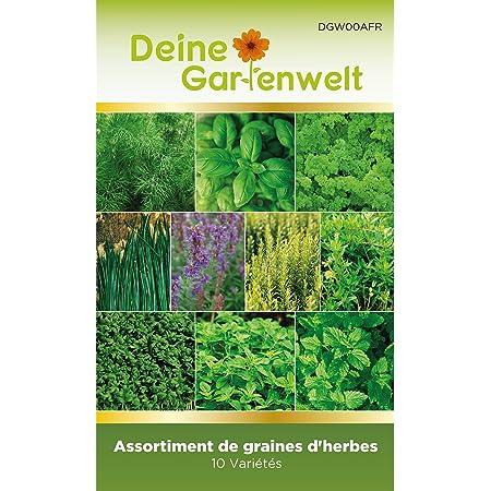 environ 15 g Jardin Cresson großblättrig-Lepidium Sativum 5000 Graines