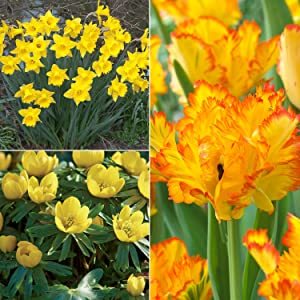 Van Zyverden Color Your Garden Yellow Collection Set of 73 Bulbs