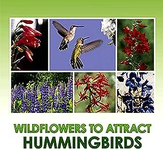Best wildflower seed rolls Reviews