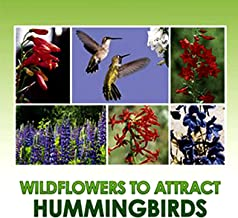 Hummingbird Nectar Wildflower Seeds Bulk Open-Pollinated Wildflower Seed Mix Packet, Non-GMO, NO FILLERS, Annual, Perennia...