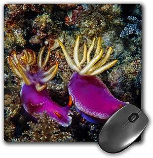 3drose Pair of Nudibranch, Hypselodoris Bullock, Kapalai Island, Malaysia - Mouse Pad