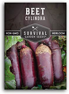 Survival Garden Seeds - Cylindra Beet Seed for Planting - Packet with Instructions to Plant and Grow Your Home Vegetable G...