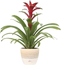 mothers day plants for delivery