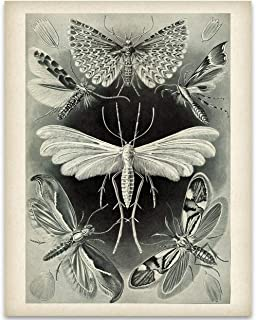 Haeckel Moth Illustration - 11x14 Unframed Art Print - Great Gift for Biologists or Nature Lovers