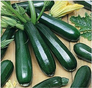 Amazon Com Zucchini Vegetables Plants Seeds Bulbs Patio