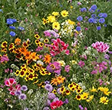 Late Blooming Wildflower Mix (250 seeds) autumn fall variety