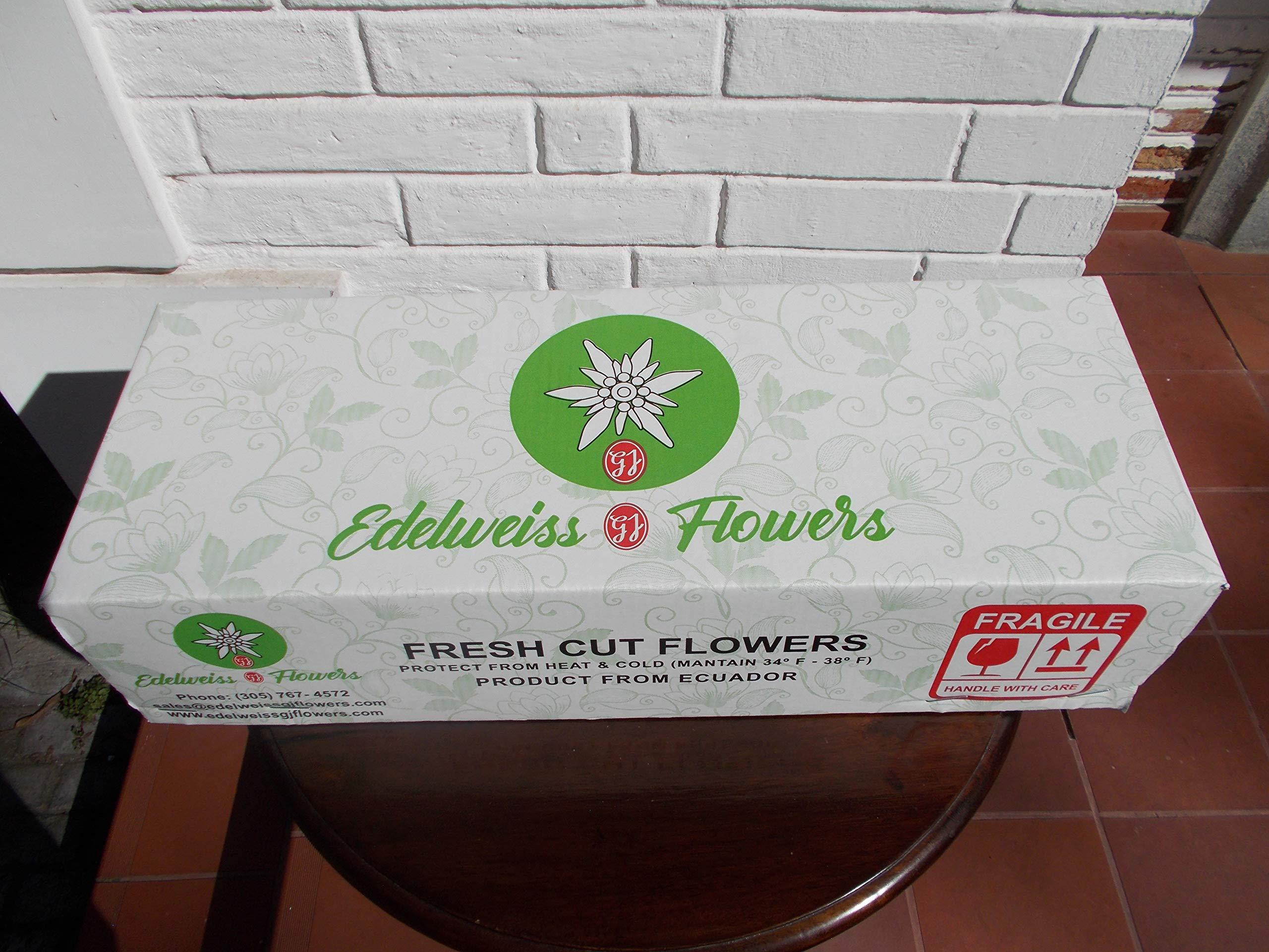 Edelweiss GJ Flowers Super Star