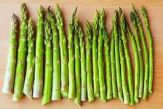 Risalana Asparagus - Martha Washington - 5 Starter Plants - 1.5