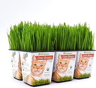 Bell Rock Growers Pet Greens Live Original Pet Grass, 15 By 11 By 7-Inch, 6-Pack