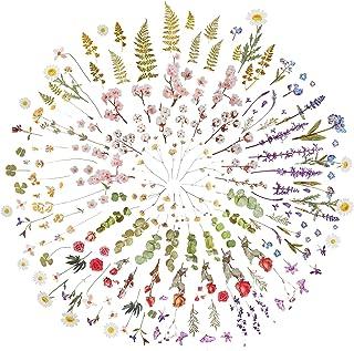 Fingertoys 12 feuilles d'autocollants de scrapbooking, bricolage divers motifs de fleurs autocollants thèmes de la nature ...