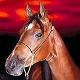 Racing Pferd: Kinder Puzzle