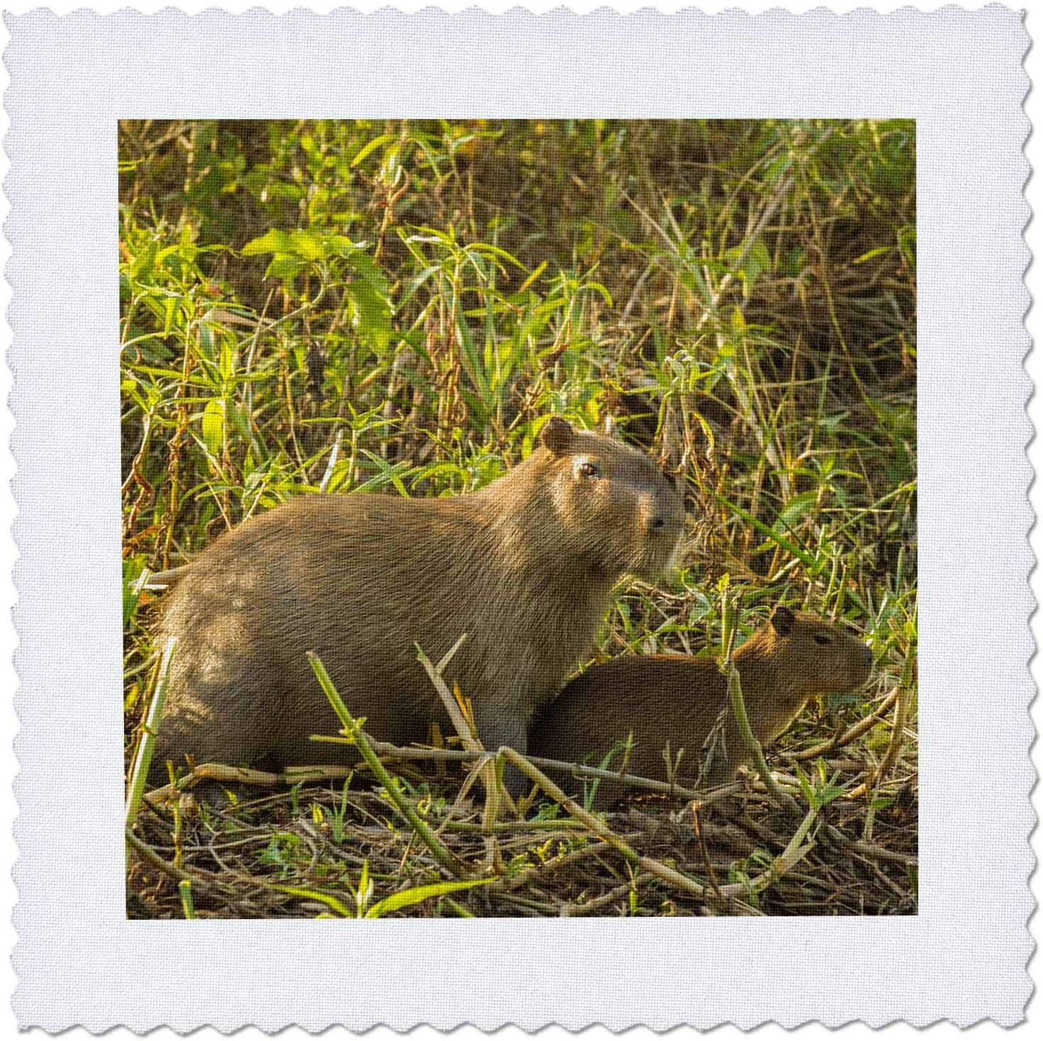 3dRose Brazil Pantanal. Capybara adult Discount Max 90% OFF is also underway - Squar Quilt young. and