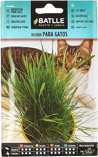 Semillas Aromáticas - Hierba para gatos - Batlle