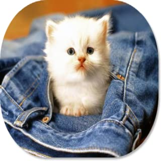 Cat Lover HD Wallpapers