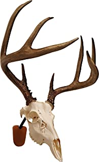 Walnut Hollow Country Euro Skull Mounting Kit