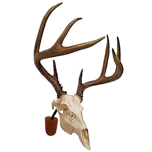 European Skull bracket Skull Hanger Mounting Bracket Arrowhead Deer mount 12