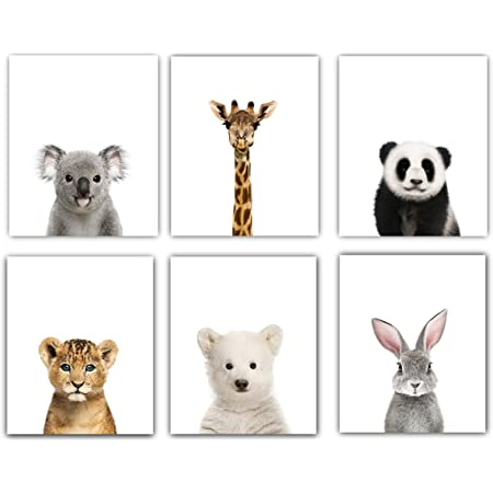 Baby Nursery Decor Pictures (8x10)   Set of 6 (Unframed) Cute Animal Photography Wall Prints for Baby Boys & Girls Room