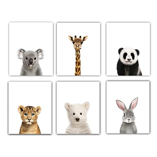 Designs by Maria Inc. Baby Nursery Decor Pictures (8x10)   Set of 6 (Unframed) Cute Animal Photography Wall Prints for Baby Boys & Girls Room