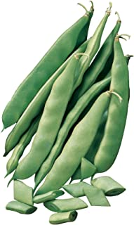 Burpee Early Italian Bush Bean Seeds 2 ounces of seed