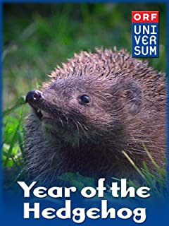 Year of the Hedgehog
