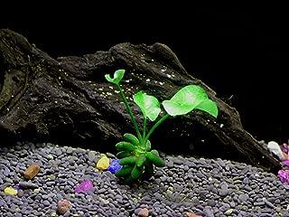 banana plant fish tank
