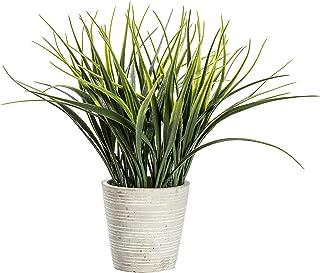 Frank Hudson Spider Grass with Cement Pot, 180 x 180 x 230mm