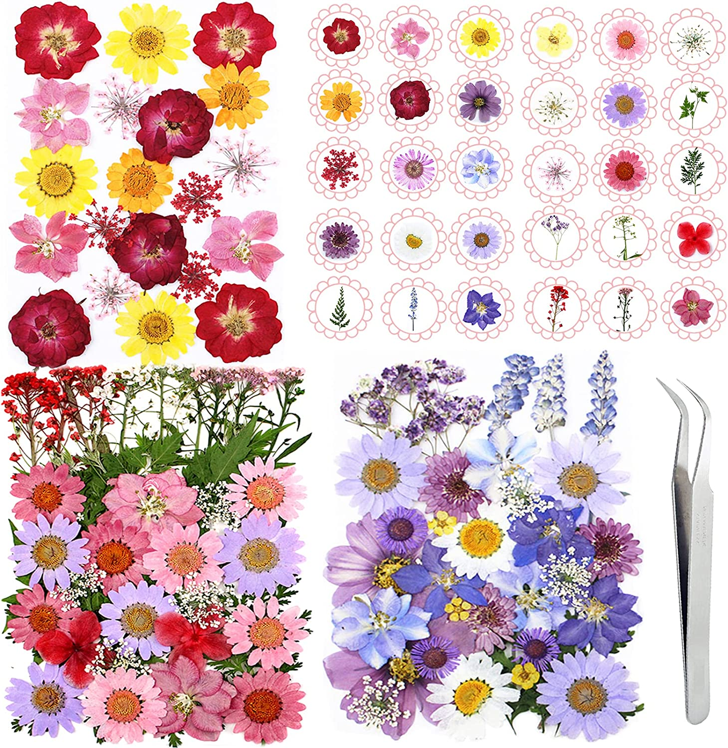 120PCS Dried depot Flowers for Resin Pressed Real Fresno Mall He Dry