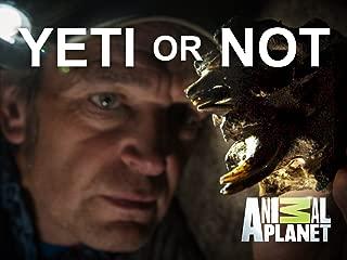 Yeti or Not Season 1
