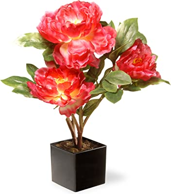 National Tree 15 Inch Fuchsia Peony Flowers with Black Square Ceramic Base (NF36-5128D
