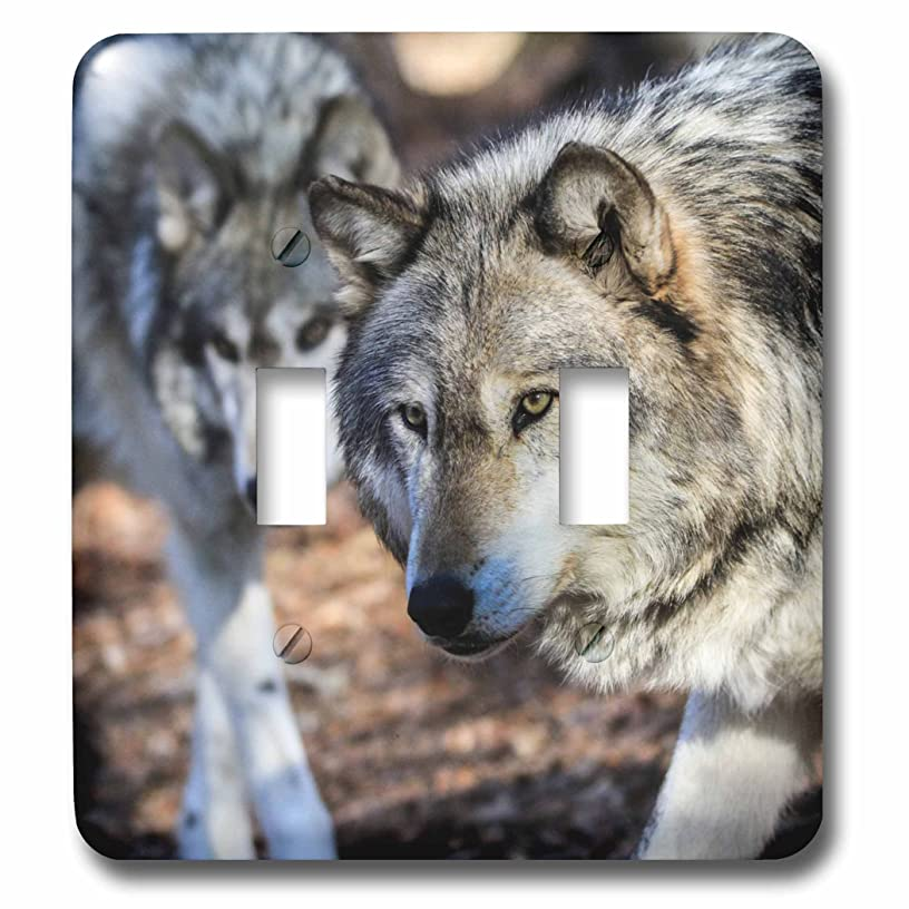 3dRose lsp_269373_2 Gray Wolf with a Friend Toggle Switch Mixed