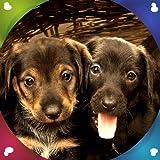 Fonds d'écran Live Puppies