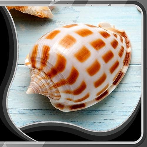 Imágenes de Shell Live