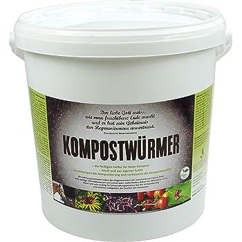 KOMPOSTWÜRMER | natursache.de | Regenwürmer lebend kaufen - effektive Kompostierung von Bioabfall im Schnellkomposter Thermokomposter Wurmkiste Wurmkomposter Komposthaufen, Anzahl:250 STK./Box