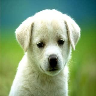 Puppy Dog Cute Wallpaper