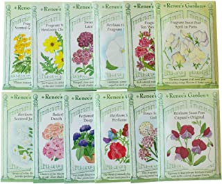 Easy Flowers for Fragrance Seeds Collection - 12 Fragrant Flower Seed Packets - Flower Gardening by Renee's Garden - Sweet Pea, Stock, Phlox, Alyssum & More