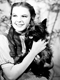 MOVIE FILM CHARACTERS DOROTHY TOTO WIZARD OZ GARLAND JUDY 18X24'' POSTER ART PRINT LV10132