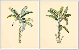 Palm Trees Wall Art - Vintage Botanical Prints- Set of 2-11x14 - Nature Decor - Unframed