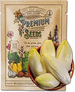 Endive Seeds for Planting - Witloof Chicory - 2 g 450 Seeds - Non-GMO, Heirloom Endive Seeds - Home Garden Vegetable Seeds - Sealed in a Beautiful Mylar Package for Extended Shelf Life