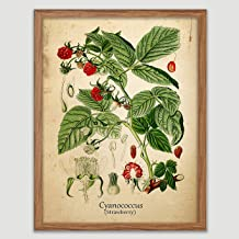 strawberry botanical print