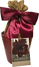Daylily Nursery Elegant Black Pearl Amaryllis Gift Growing Kit, Deluxe Edition. Includes Beautiful Ceramic Pot, Big Black Pearl Bulb, a Burlap Gift Bag and Professional Growing Medium.