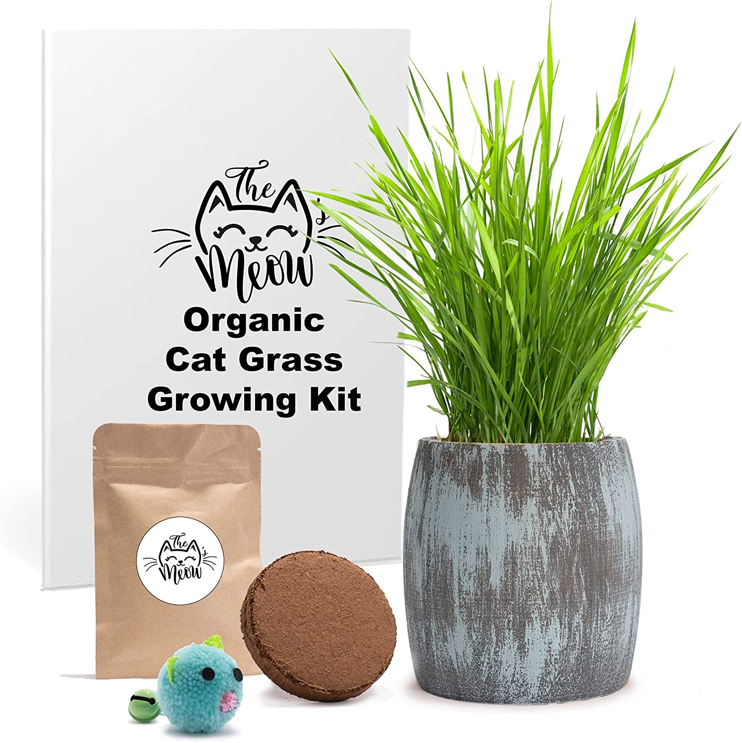 Organic Cat Our shop OFFers the best service Grass Seeds Kit New arrival - for 3 Growing' Soil.