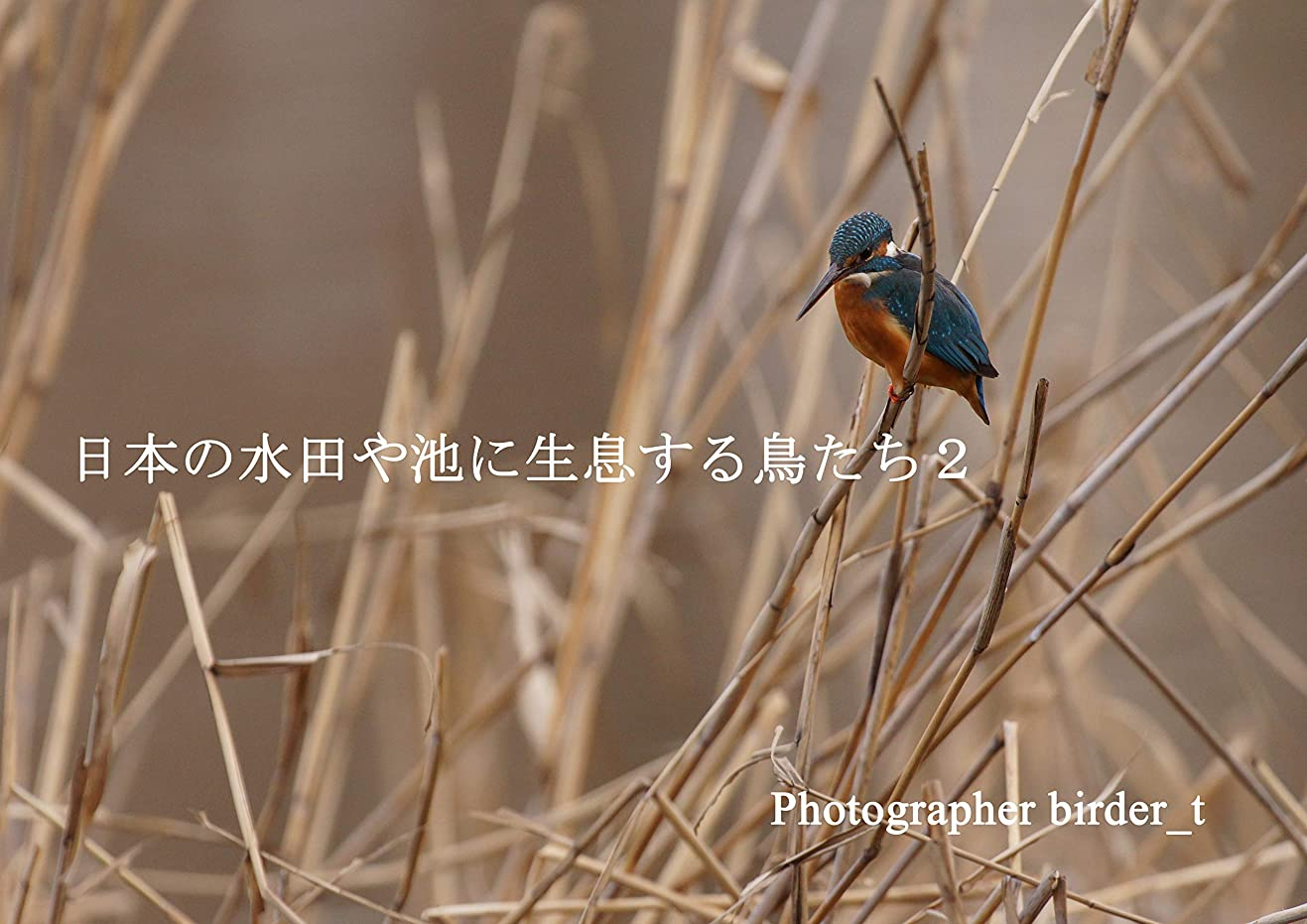 合理化アレキサンダーグラハムベル万一に備えて日本の水田や池に生息する鳥たち2 ~カワセミ~