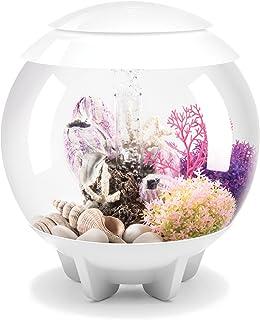 Jbj Aquarium