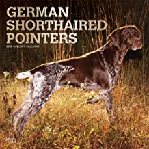German Shorthaired Pointers 2020 12 x 12 Inch Monthly Square Wall Calendar with Foil Stamped Cover, Animals Dog Breeds