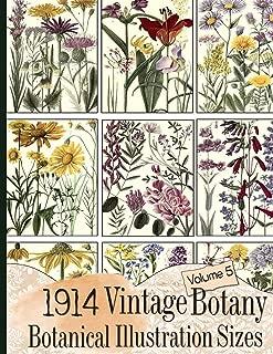 1914 Vintage Botany Botanical Illustration Sizes (Floral Ephemera Series)