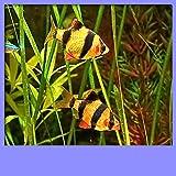 Aquarium Live Wallpapers